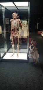 ALT MUSEO HUMAN BODY 1
