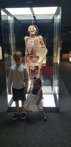 ALT MUSEO HUMAN BODY 2