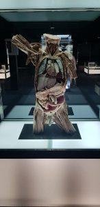 ALT MUSEO HUMAN BODY 3